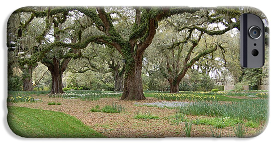 Live Oak IPhone 6s Case featuring the photograph Majestic Live Oaks In Spring by Suzanne Gaff