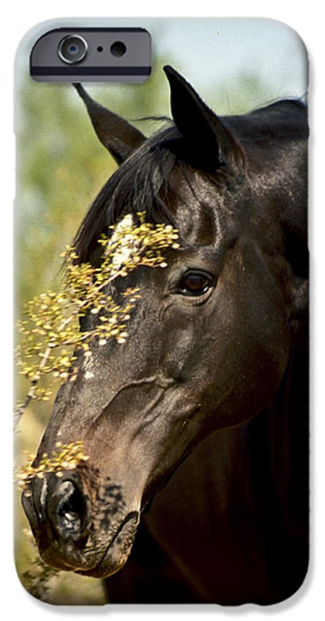 Horse IPhone 6s Case featuring the photograph Portrait Of A Thoroughbred by Kathy McClure