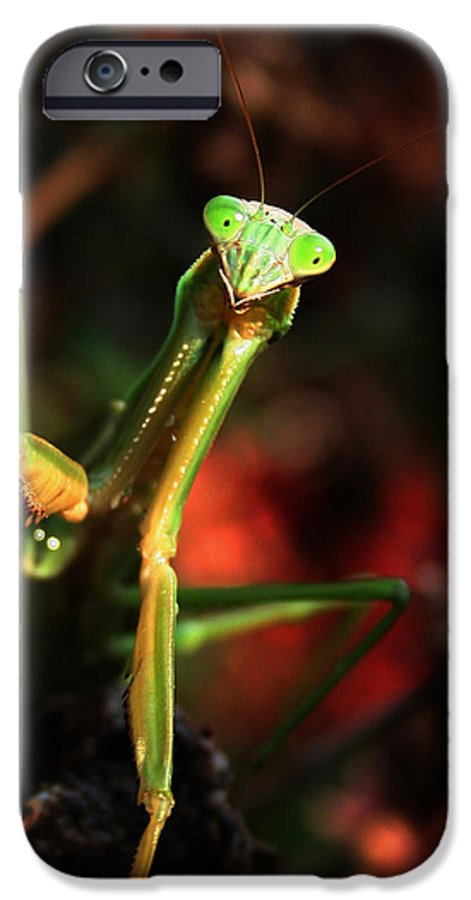 Praying Mantis IPhone 6s Case featuring the photograph Praying Mantis Portrait by Linda Sannuti