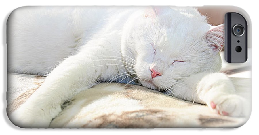 Andee Design Cats IPhone 6s Case featuring the photograph Sweet Dreams by Andee Design