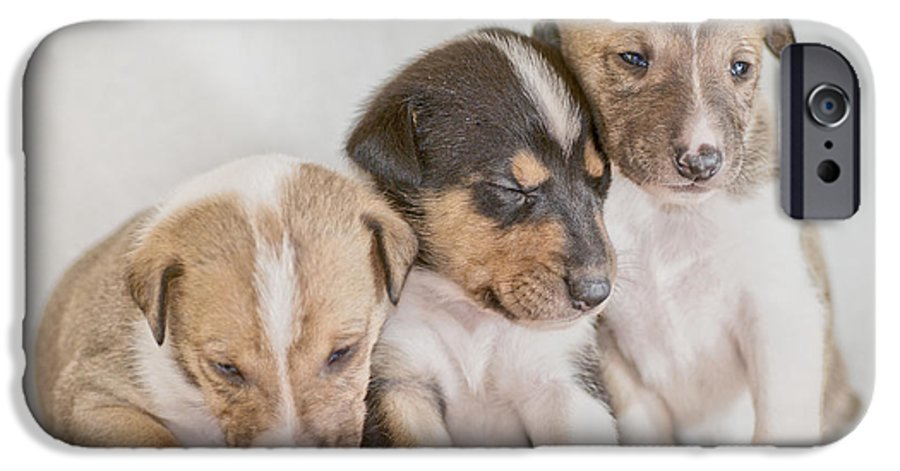 Puppy IPhone 6s Case featuring the photograph Three Collie Puppies by Martin Capek