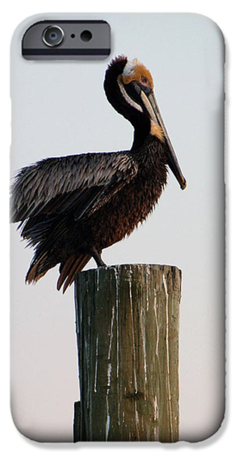 Brown Pelican IPhone 6s Case featuring the photograph Will This Pose Do by Suzanne Gaff