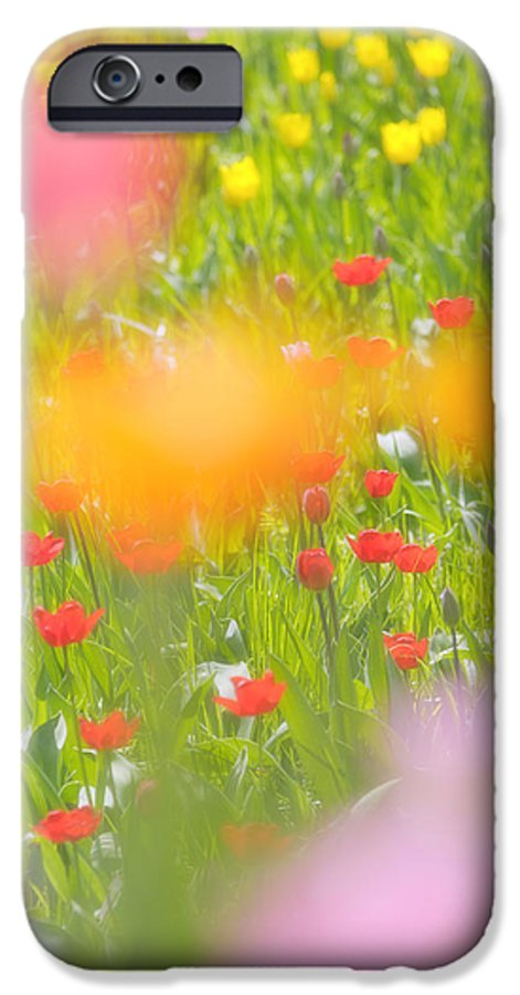Flower IPhone 6s Case featuring the photograph Tulips by Silke Magino