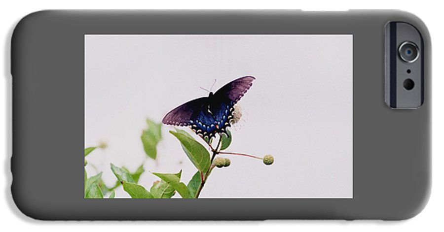 Butterfly IPhone 6s Case featuring the photograph 080706-5 by Mike Davis