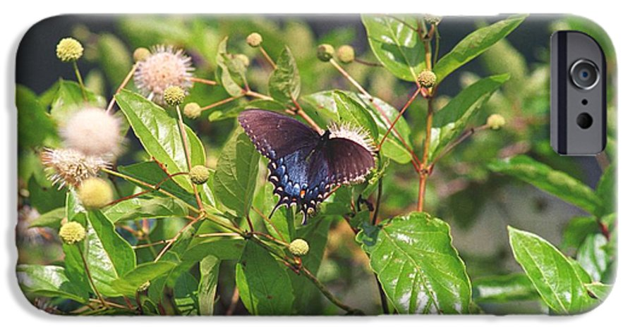 Butterfly IPhone 6s Case featuring the photograph 080706-6 by Mike Davis