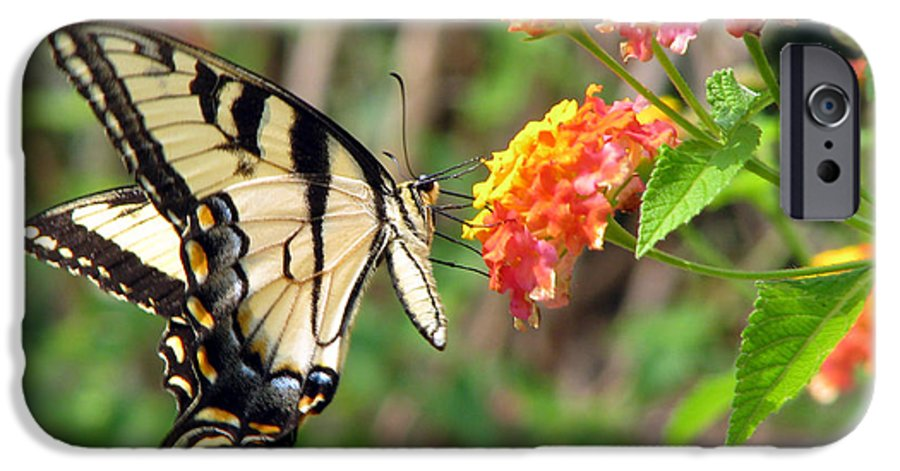 Butterfly IPhone 6s Case featuring the photograph Butterfly by Amanda Barcon