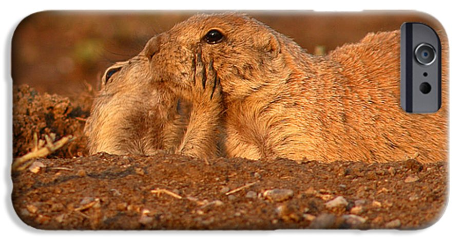 Prairie Dog IPhone 6s Case featuring the photograph Prairie Dog Tender Sunset Kiss by Max Allen