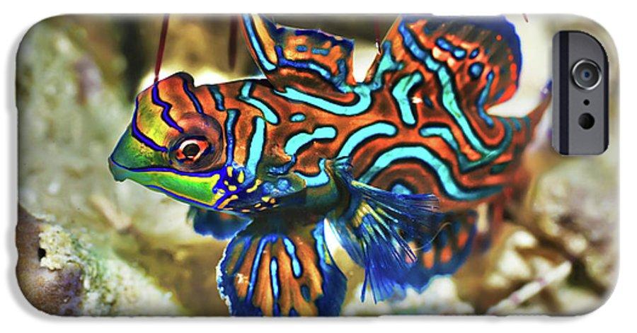 Mandarinfish IPhone 6s Case featuring the photograph Tropical Fish Mandarinfish by MotHaiBaPhoto Prints