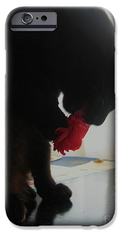 Photograph Cat Black Red Flower Camellia IPhone 6s Case featuring the photograph Cat Eating Camellia by Seon-Jeong Kim