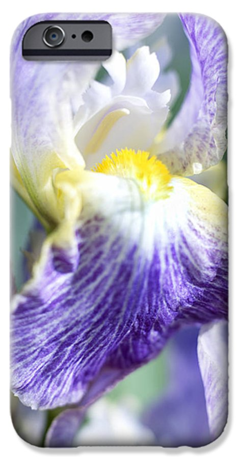 Genus Iris IPhone 6s Case featuring the photograph Iris Flowers by Tony Cordoza