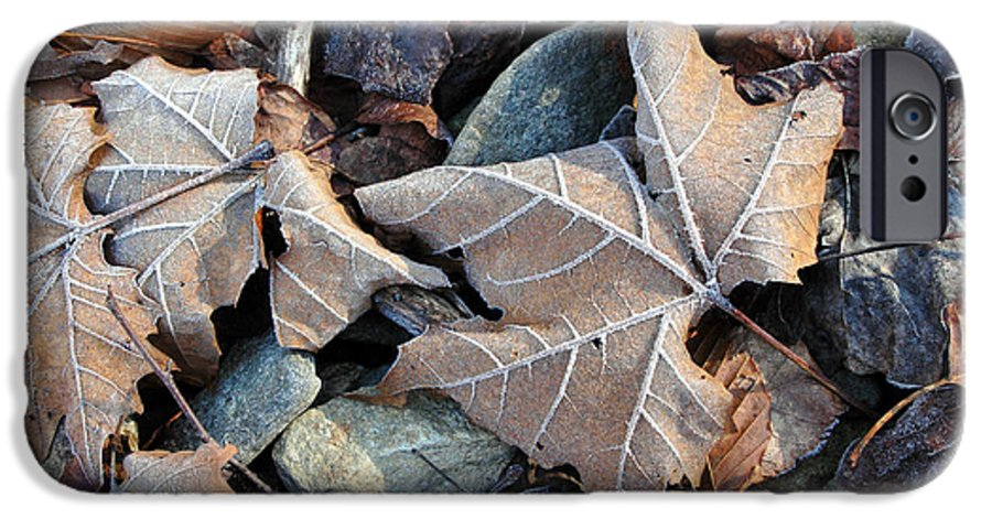 Leaf IPhone 6s Case featuring the photograph Untitled by Kathy Schumann