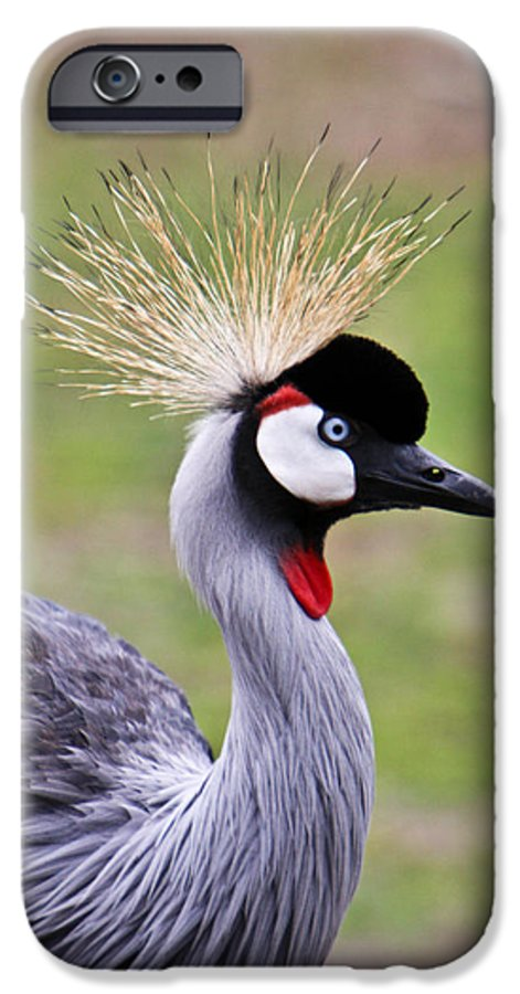 Bird IPhone 6s Case featuring the photograph African Crowned Crane by Douglas Barnett