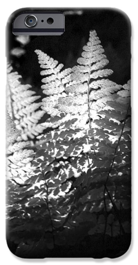 Fern IPhone 6s Case featuring the photograph After Glow by Randy Oberg