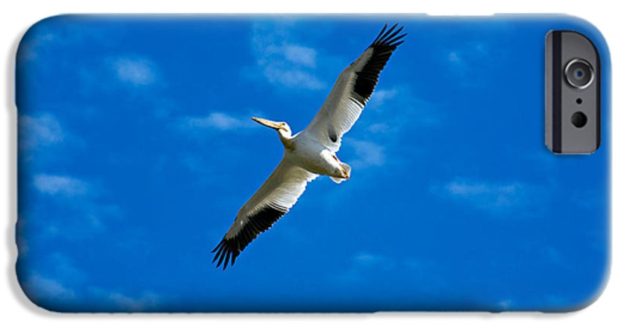 American IPhone 6s Case featuring the photograph American White Pelican by Marilyn Hunt