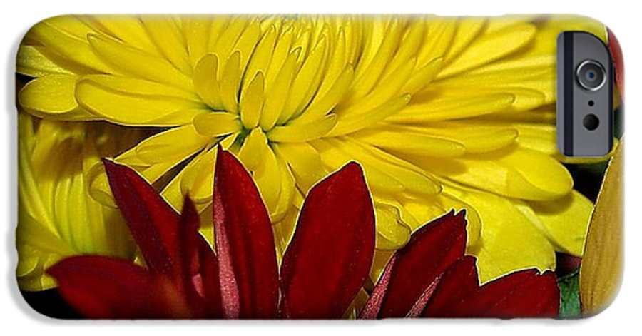 Chrysanthemum Photography IPhone 6s Case featuring the photograph Autumn Colors by Patricia Griffin Brett