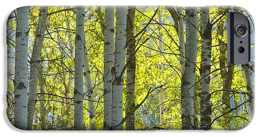 Trees IPhone 6s Case featuring the photograph Autumn Through The Trees by Idaho Scenic Images Linda Lantzy