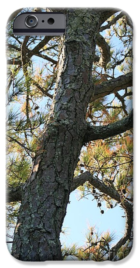 Tree IPhone 6s Case featuring the photograph Bald Head Tree by Nadine Rippelmeyer