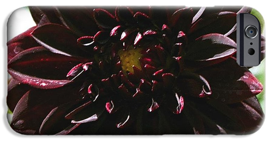 Flower IPhone 6s Case featuring the photograph Black Dalia by Dean Triolo