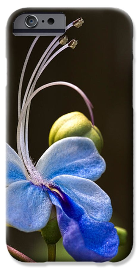 Flower IPhone 6s Case featuring the photograph Blooming Butterfly by Christopher Holmes
