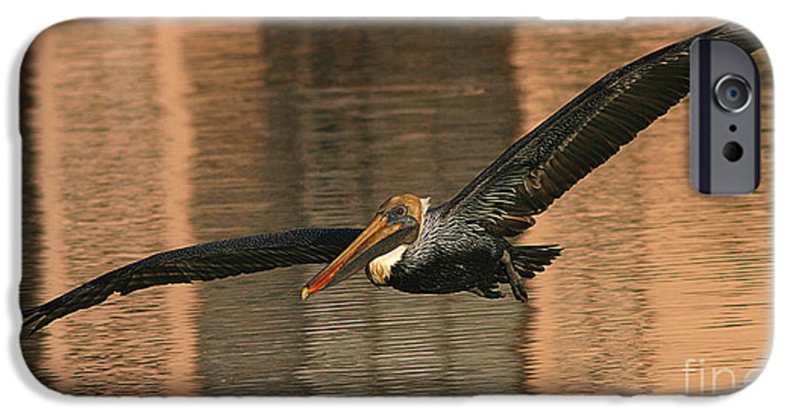 Pelican IPhone 6s Case featuring the photograph Brown Pelican On A Sunset Flyby by Max Allen