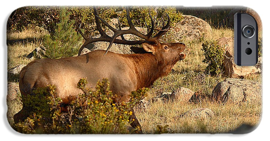 Elk IPhone 6s Case featuring the photograph Bull Elk Bugling Among The Rocks by Max Allen