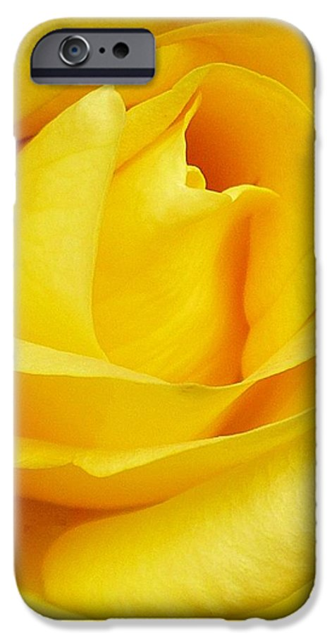 Botanical IPhone 6s Case featuring the photograph Buttercup Rose by Florene Welebny