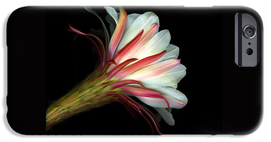 Scanart IPhone 6s Case featuring the photograph Cactus Flower by Christian Slanec
