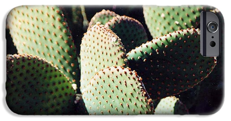 Field IPhone 6s Case featuring the photograph Cactus by Margaret Fortunato