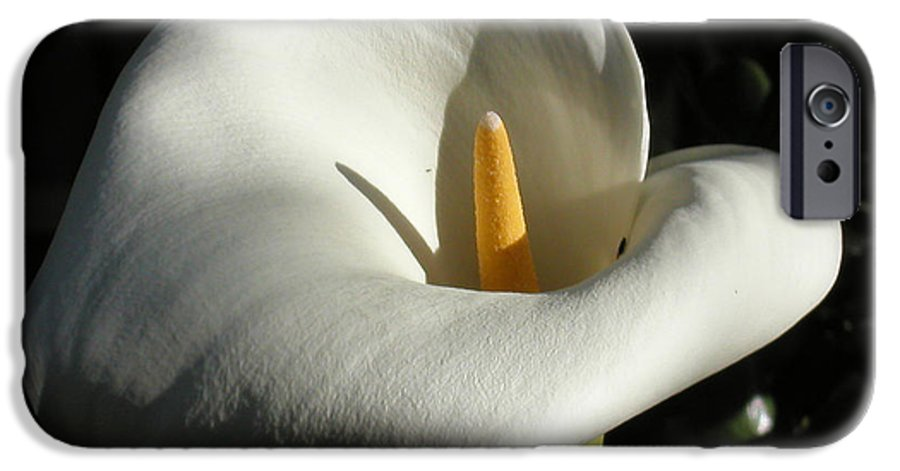 Flowers IPhone 6s Case featuring the photograph Calla Lily-santa Monica - 2005 by Ann Tracy
