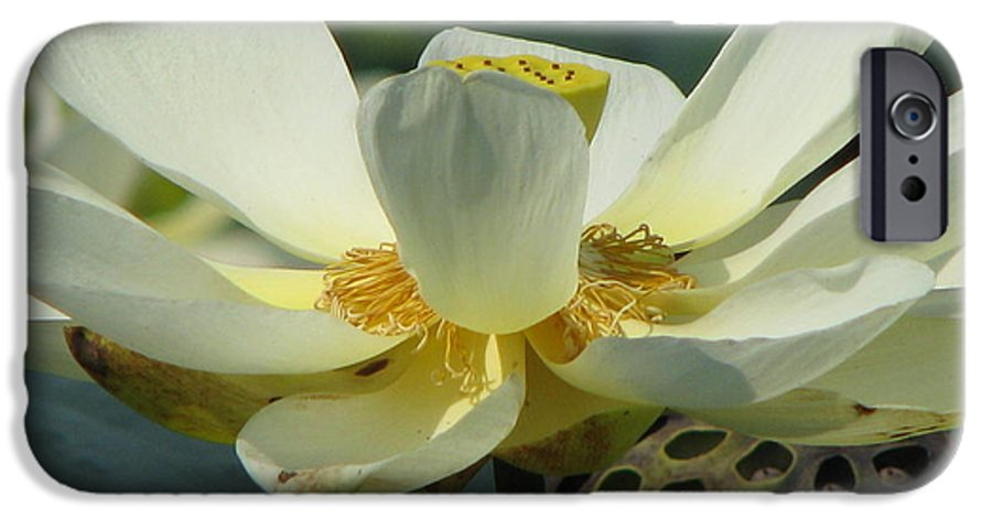 Lotus IPhone 6s Case featuring the photograph Calm by Amanda Barcon