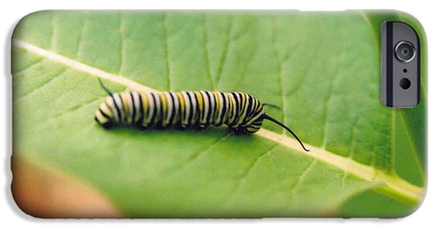 Caterpillar IPhone 6s Case featuring the photograph Caterpillar by Kathy Schumann
