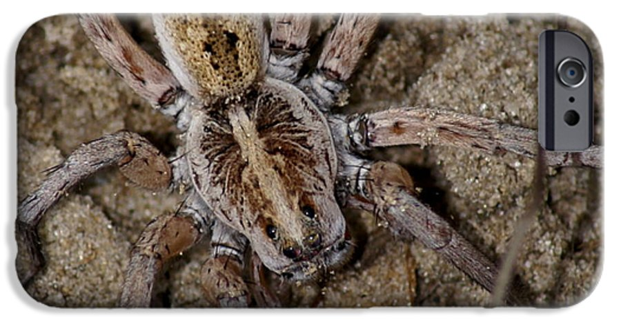 Spider IPhone 6s Case featuring the photograph Charlotte by Debbie May