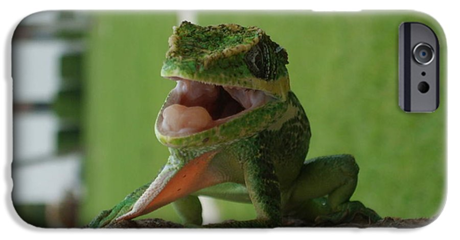 Iguana IPhone 6s Case featuring the photograph Chilling On Wood by Rob Hans