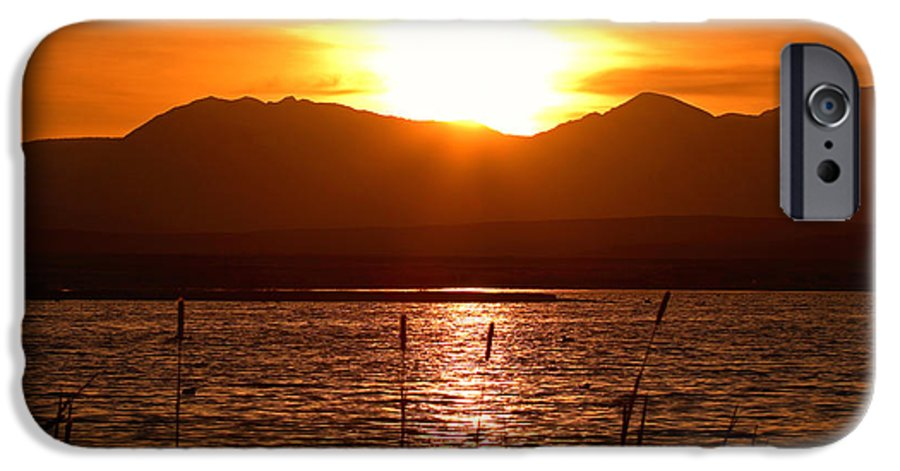 Colorado IPhone 6s Case featuring the photograph Colorado Marsh At Sunset by Max Allen