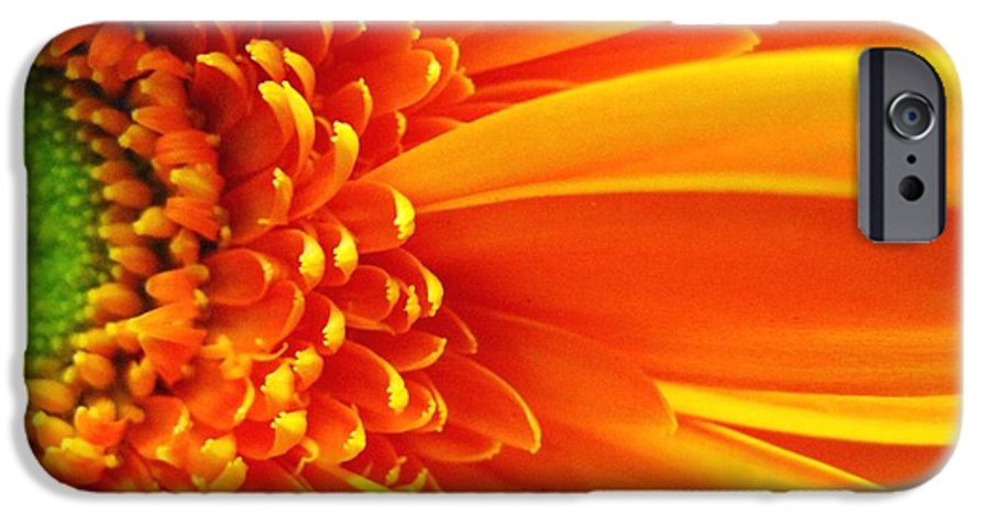 Red IPhone 6s Case featuring the photograph Colors Galore by Rhonda Barrett