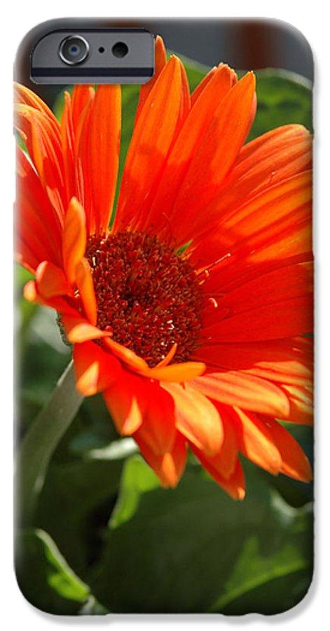 Daisy IPhone 6s Case featuring the photograph Daisy by Kathy Schumann