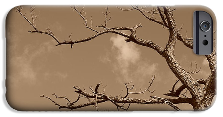 Sepia IPhone 6s Case featuring the photograph Dead Wood by Rob Hans
