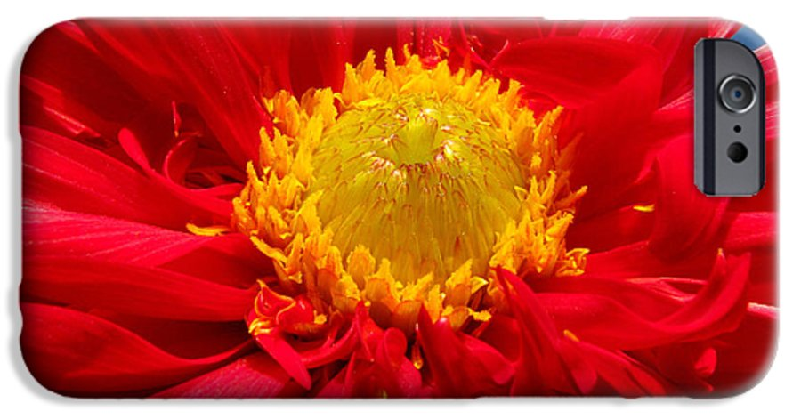 Dhalia IPhone 6s Case featuring the photograph Dhalia by Amanda Barcon