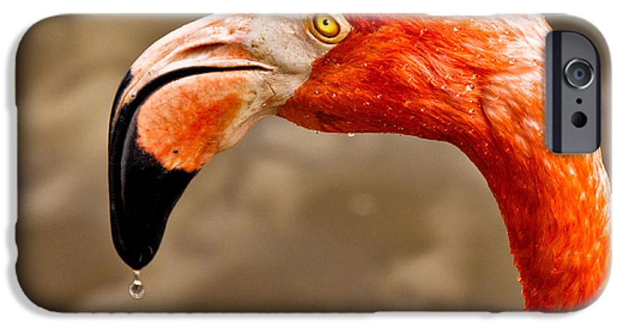 Flamingo IPhone 6s Case featuring the photograph Dripping Flamingo by Christopher Holmes
