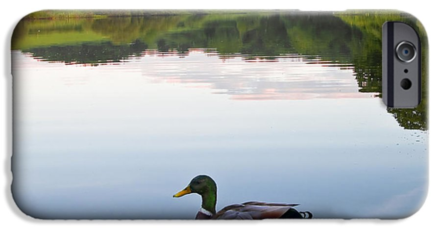 Background IPhone 6s Case featuring the photograph Duck by Svetlana Sewell