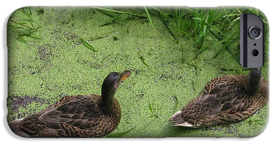 Duck IPhone 6s Case featuring the photograph Ducks In Pond by Melissa Parks