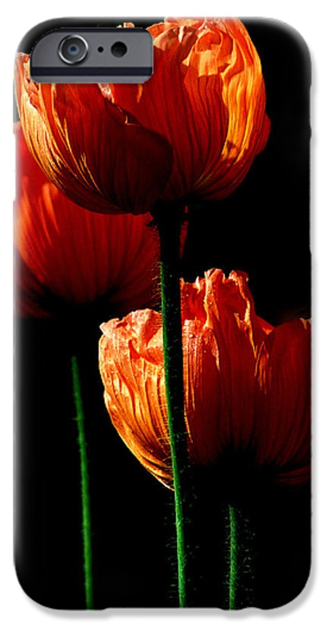 Photograph IPhone 6s Case featuring the photograph Elegance by Stephie Butler