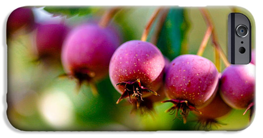 Berry IPhone 6s Case featuring the photograph Fall Berries by Marilyn Hunt