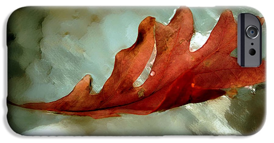 Nature IPhone 6s Case featuring the photograph Fallen Leaf by Linda Sannuti
