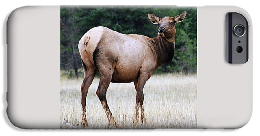 Elk IPhone 6s Case featuring the photograph Feme Elk by Tiffany Vest