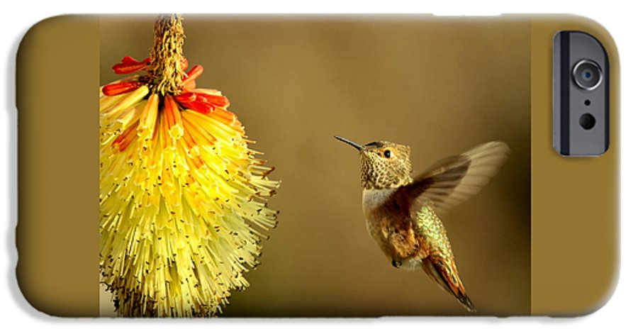 Hummingbird IPhone 6s Case featuring the photograph Flight Of The Hummer by Mike Dawson