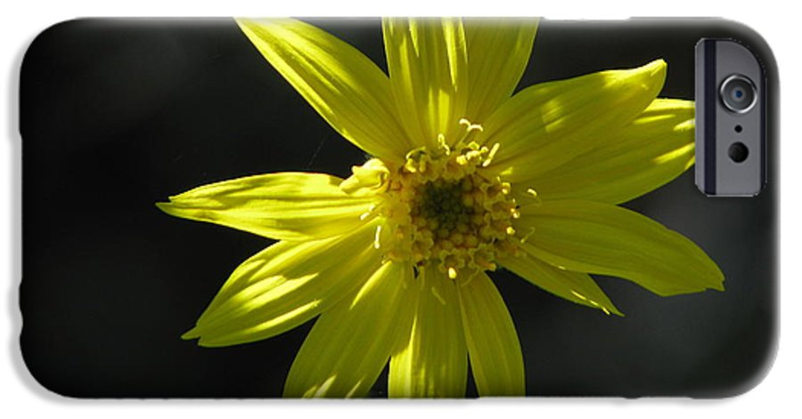 Light IPhone 6s Case featuring the photograph Floral by Amanda Barcon