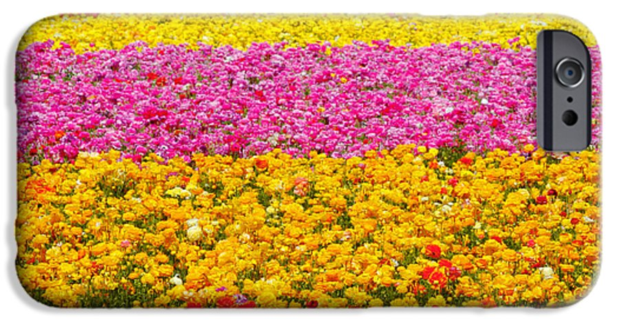 Flower IPhone 6s Case featuring the photograph Flower Fields Carlsbad Ca Giant Ranunculus by Christine Till