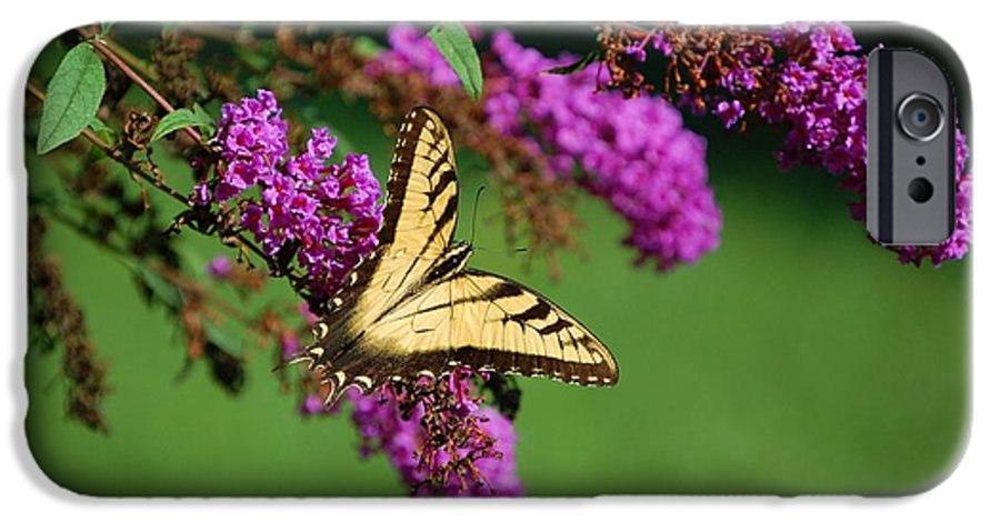 Butterfly IPhone 6s Case featuring the photograph Freedom by Debbi Granruth