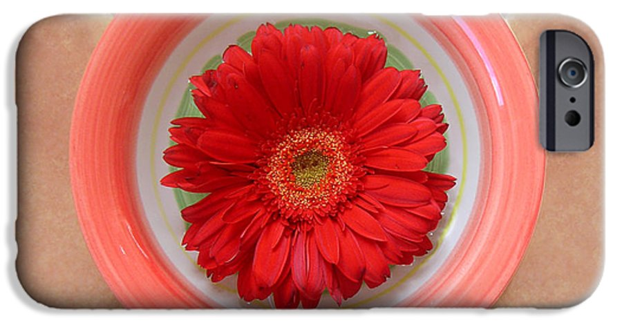 Nature IPhone 6s Case featuring the photograph Gerbera Daisy - Bowled On Tile by Lucyna A M Green
